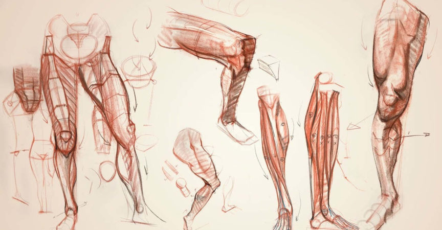Anatomy Workshop Volume 7 - Premium Courses Online