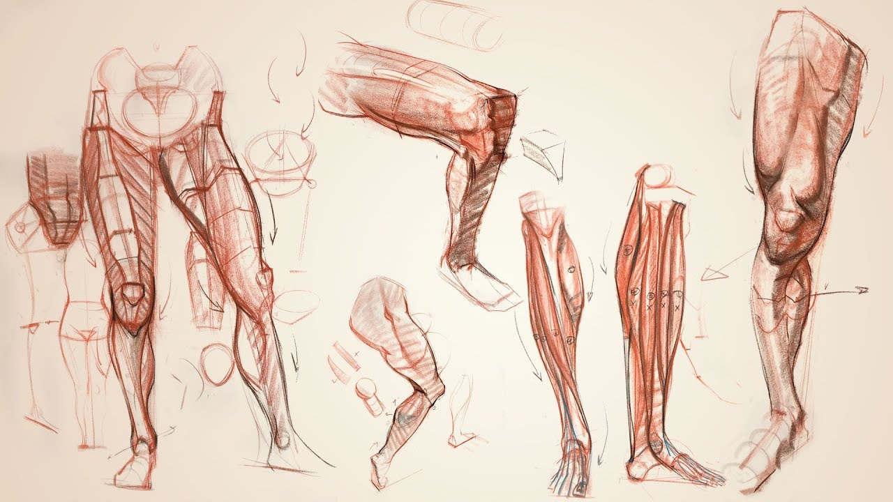 Anatomy Workshop Volume 7 - Premium Courses Online