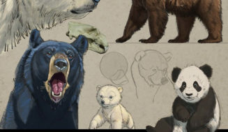 How to Draw Bears – Aaron Blaise